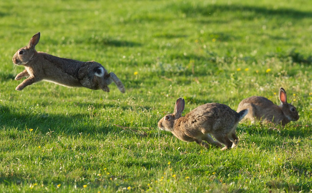 The Attack on the Rabbits